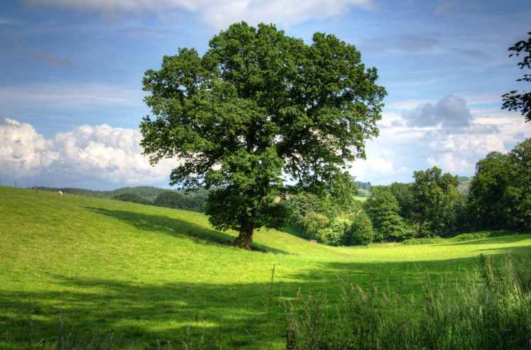 green tree on grass field during daytime